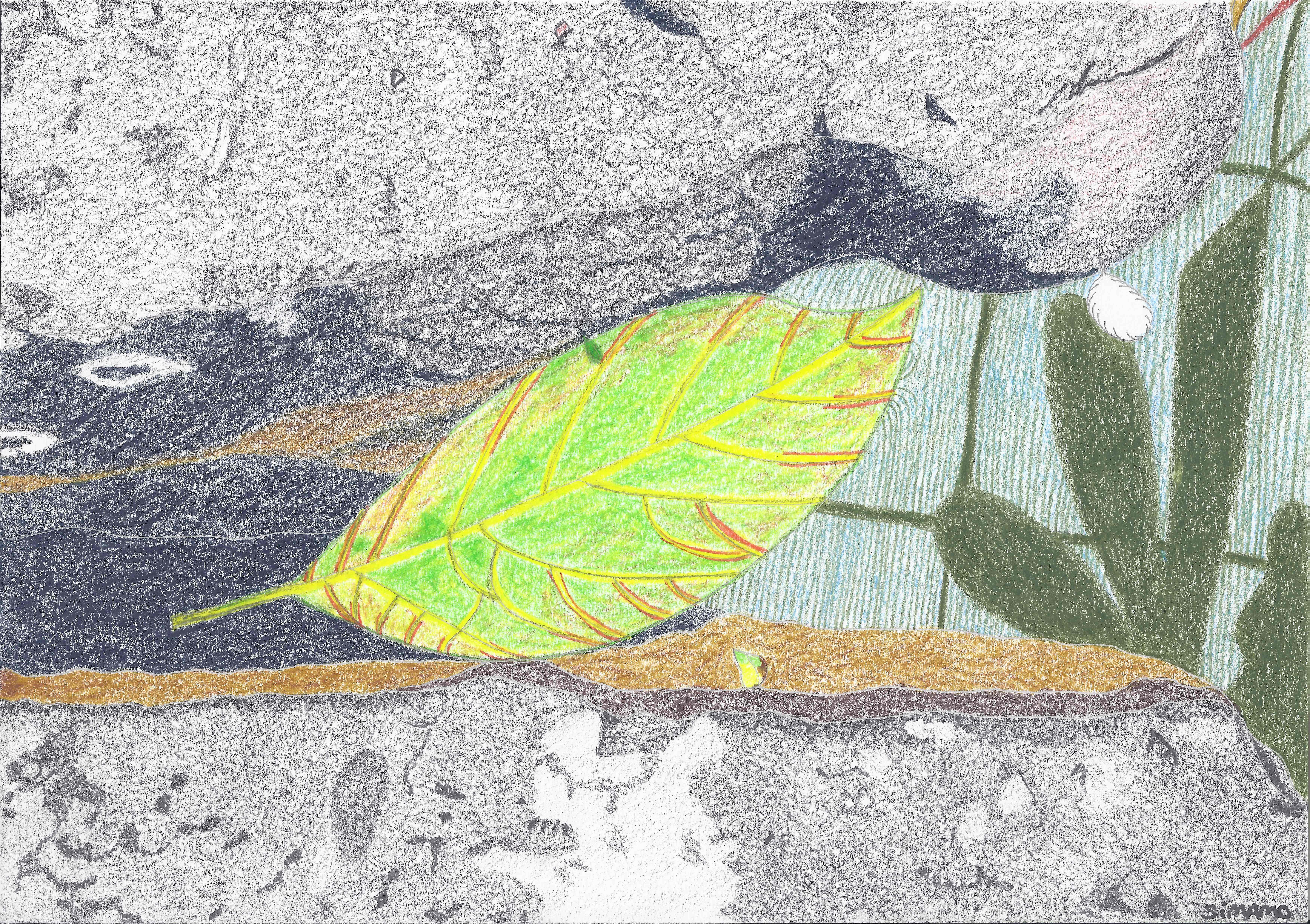 Botanicus_05_21